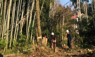 三重県内の伐採作業