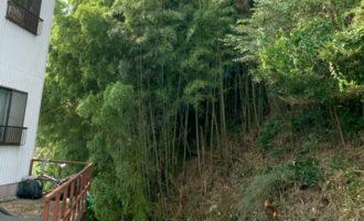 河合総合 恵那市での伐採工事